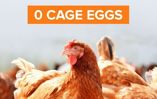 Sodexo Goes Cage Free Fresh Eggs Australia-Wide